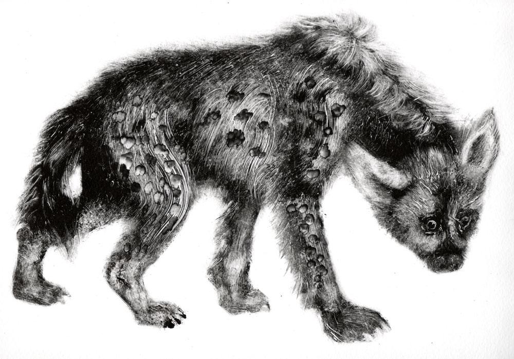 hyene-1