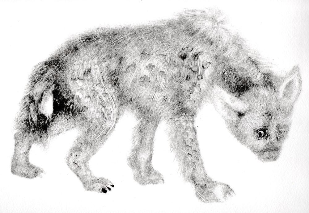 hyene-2
