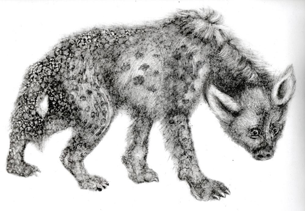 hyene-3