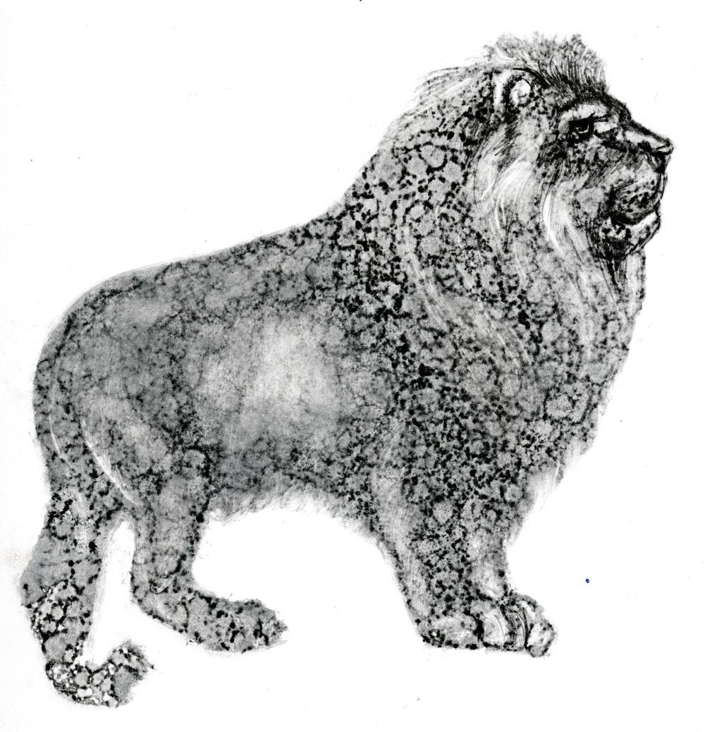 lion-3